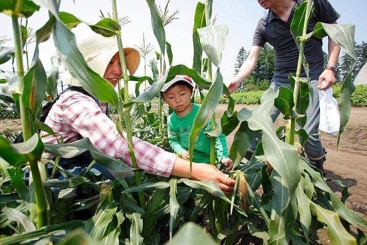 川野農園のとうきびピクニックは9月30日まで!