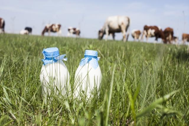 牛乳飲み比べ体験【帯広市】