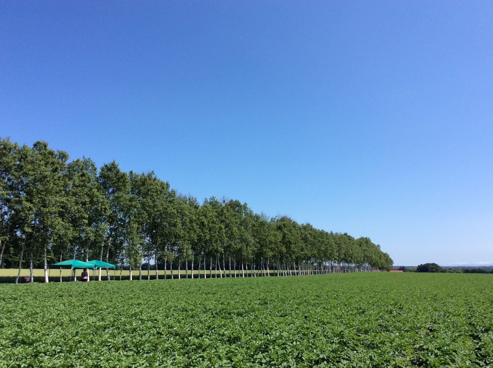 新型コロナウィルスの感染拡大に伴う農場ピクニックの開始時期延期について